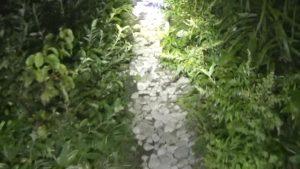 御霊櫃峠の山の上を目指す道