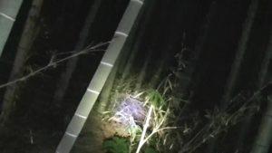 地蔵ヶ原のほこらがあったとされる森の中