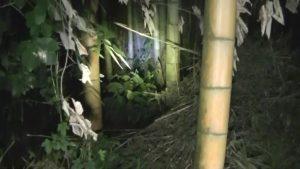 千葉県成田市地蔵ヶ原にある心霊スポットの森4