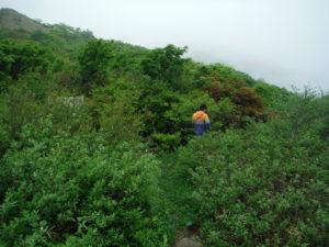 御霊櫃峠の林道1