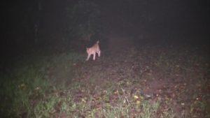 鹿児島県出水市の東光山公園でSKTのデンジャーが深夜に出会ったネコ