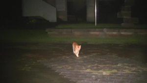 鹿児島県出水市の東光山公園にある展望台から猫が近寄ってくる時の様子