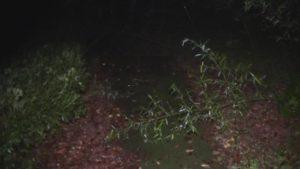 鹿児島県出水市の東光山公園の遊歩道をふさぐように倒れる植物