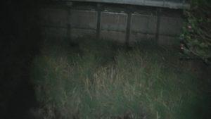 熊本県玉名市にある石塘橋から川を見下ろした写真