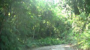 台湾にある幸福楽園廃墟へと続く登山道