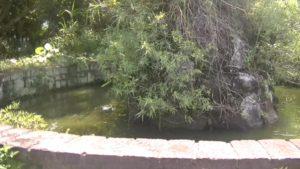 幸福楽園廃墟にあった池のようなもの